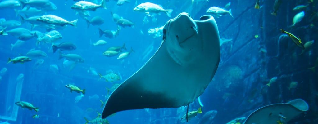 Biglietti per l'acquario The Lost Chambers di Dubai