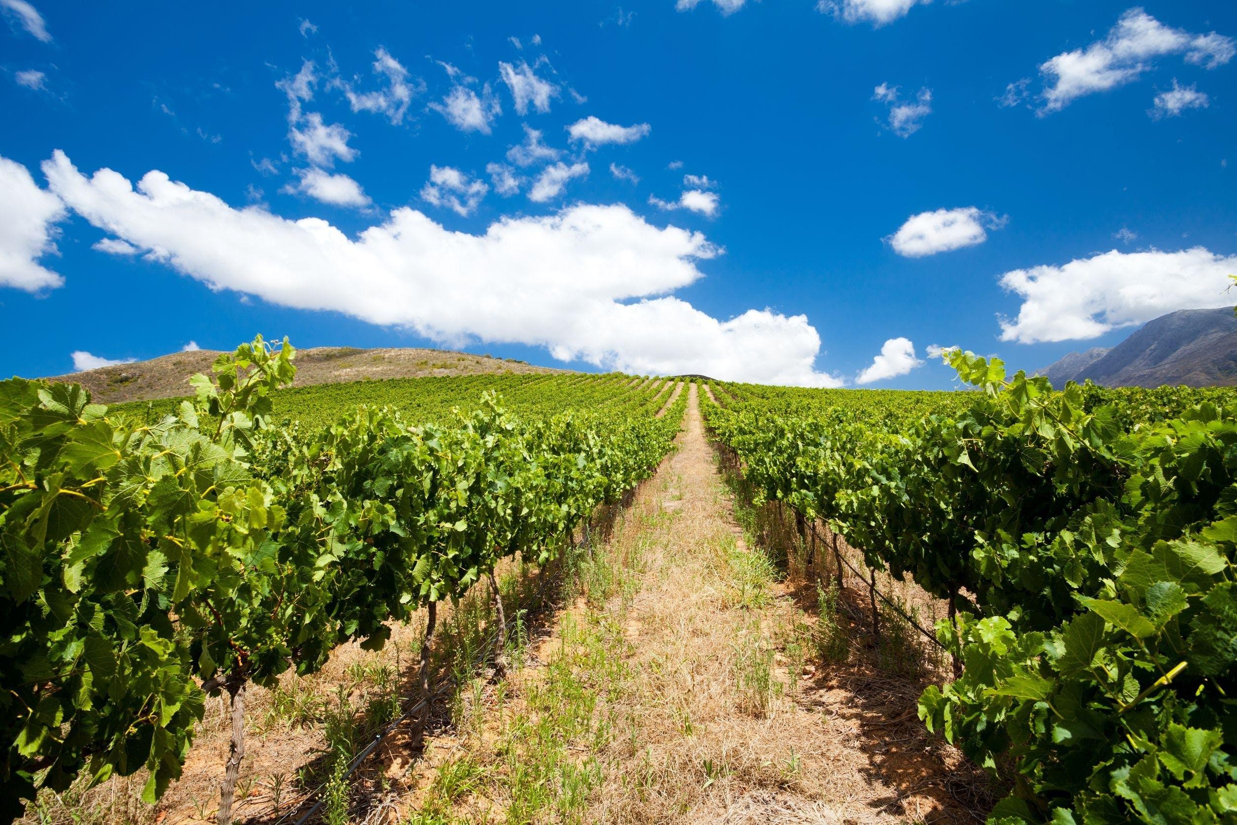 Gastronomía,Tours enológicos,Otros gastronomía,Excursión a Cape Winelands