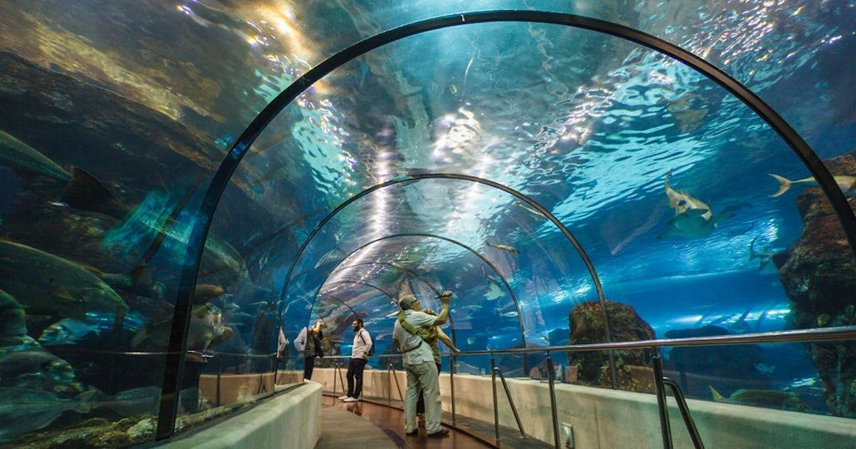 Entradas y visitas guiadas al aquarium de barcelona musement for Precio entrada aquarium
