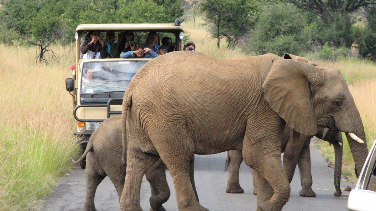 Ver la ciudad,Actividades,Visitas en otros vehículos,Salidas a la naturaleza,Excursión a la Reserva Pilanesberg