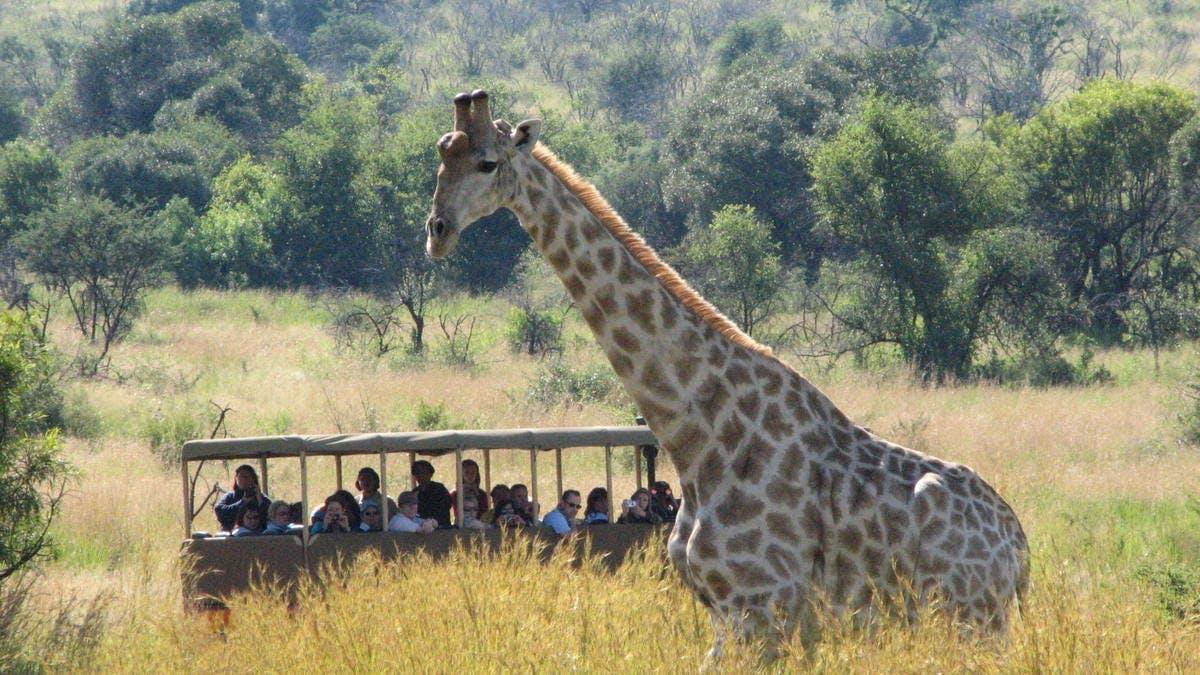 Salir de la ciudad,Excursiones de un día,Excursión a la Reserva Pilanesberg