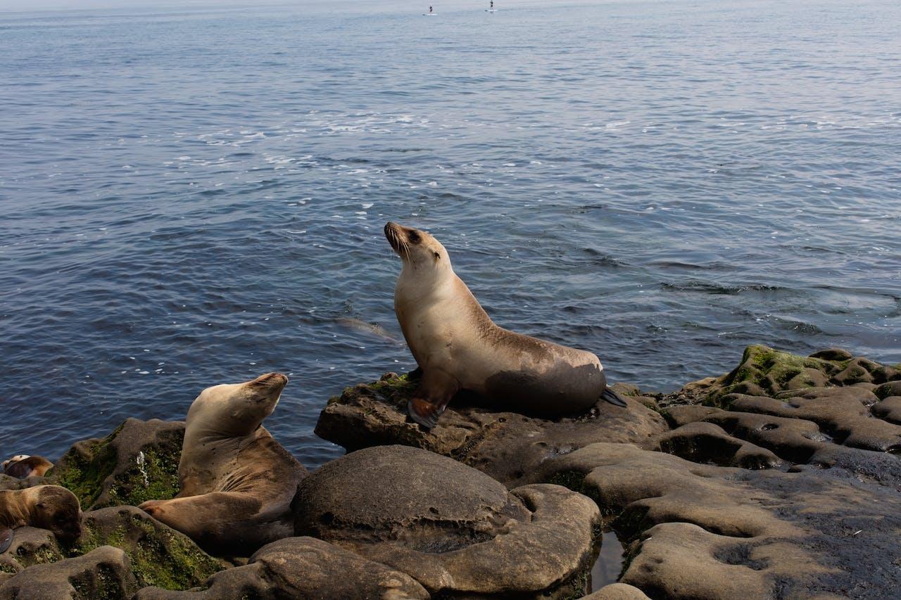 Coastal California day tour