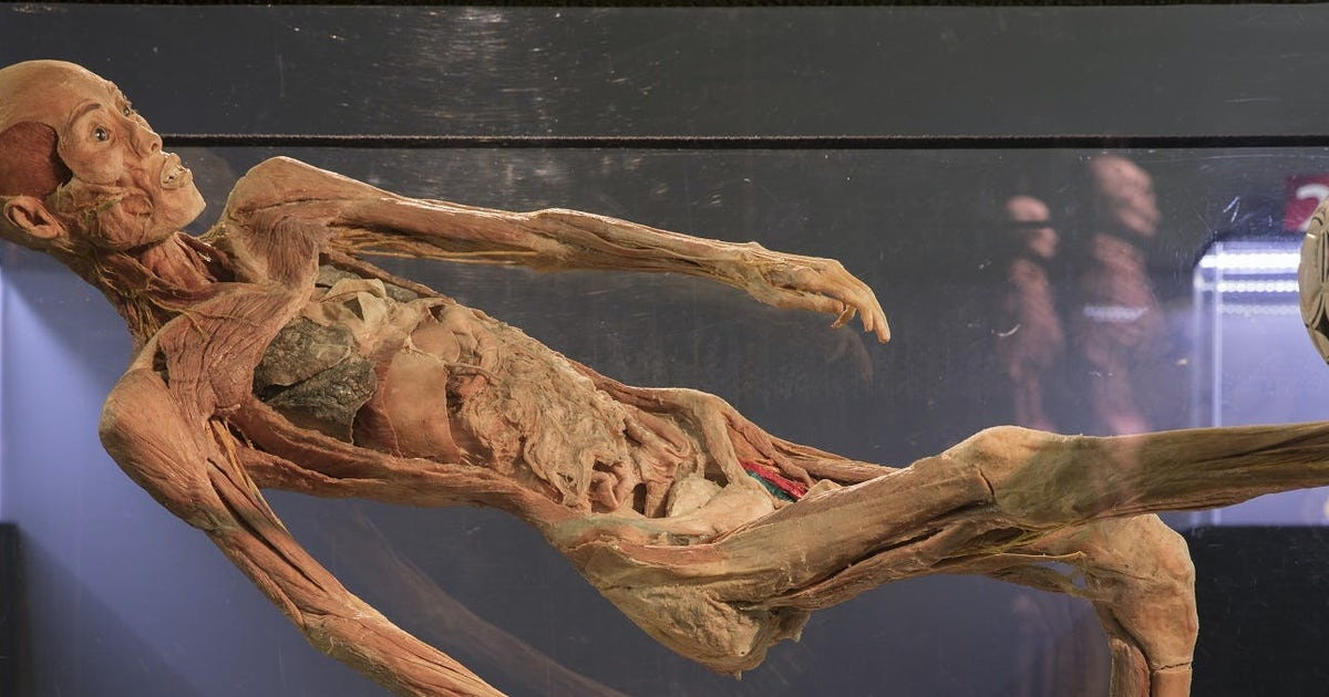 Human Bodies Exhibition Tickets With Audio Guide Musement