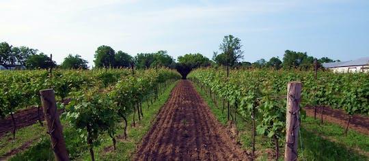 Tour privato di un'azienda vinicola nella regione del Niagara