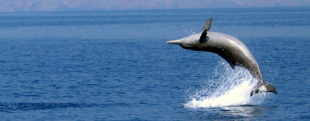 Crociera con i delfini di mezza giornata da Mascate