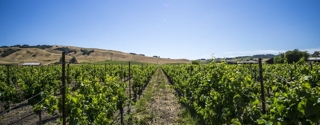 Sonoma Wine Country half-day tour