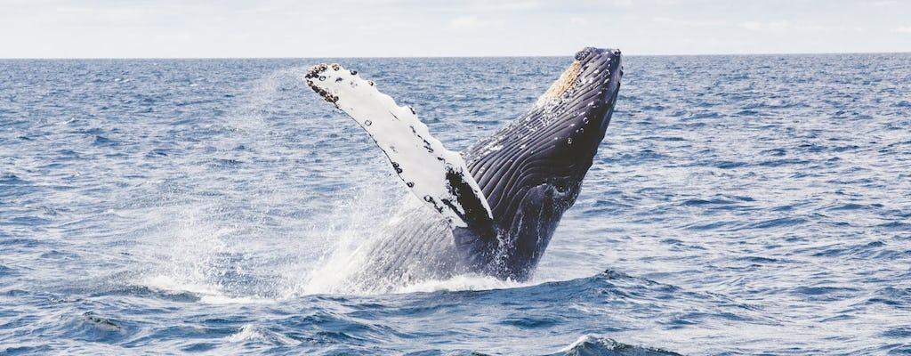 Observação de baleias em San Diego