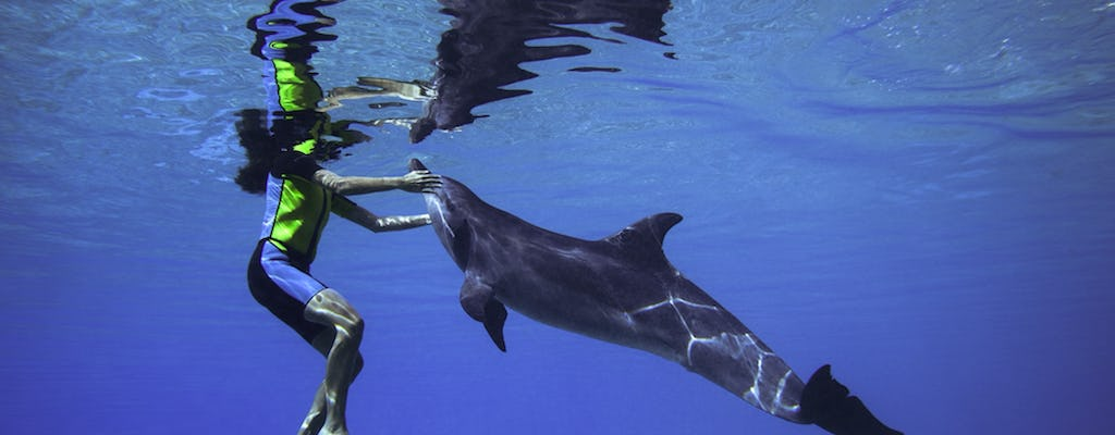 Dubai dolphin adventure with Aquaventure Waterpark access