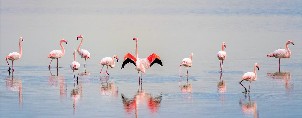 One-day tour to discover Camargue