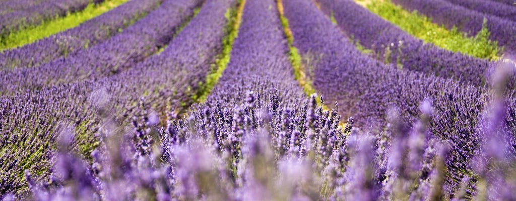 Full day lavender tour from Arles