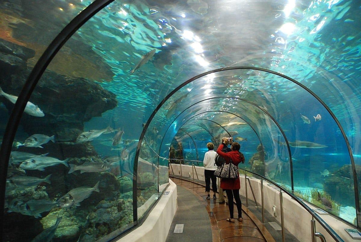 Aquarium van Barcelona sla de lijnkaartjes over