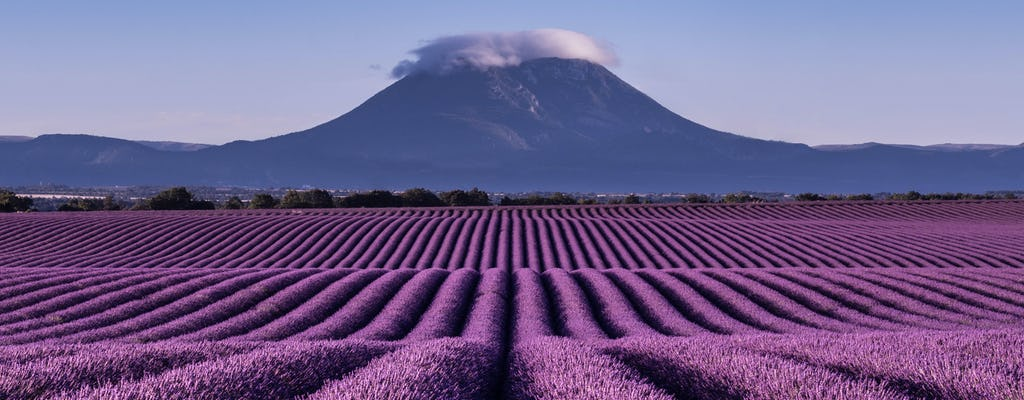 Lavender tour to Valensole from Marseille