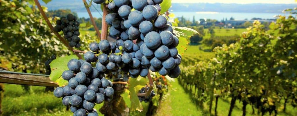 Passeio de vinho de dia inteiro na região de Medoc
