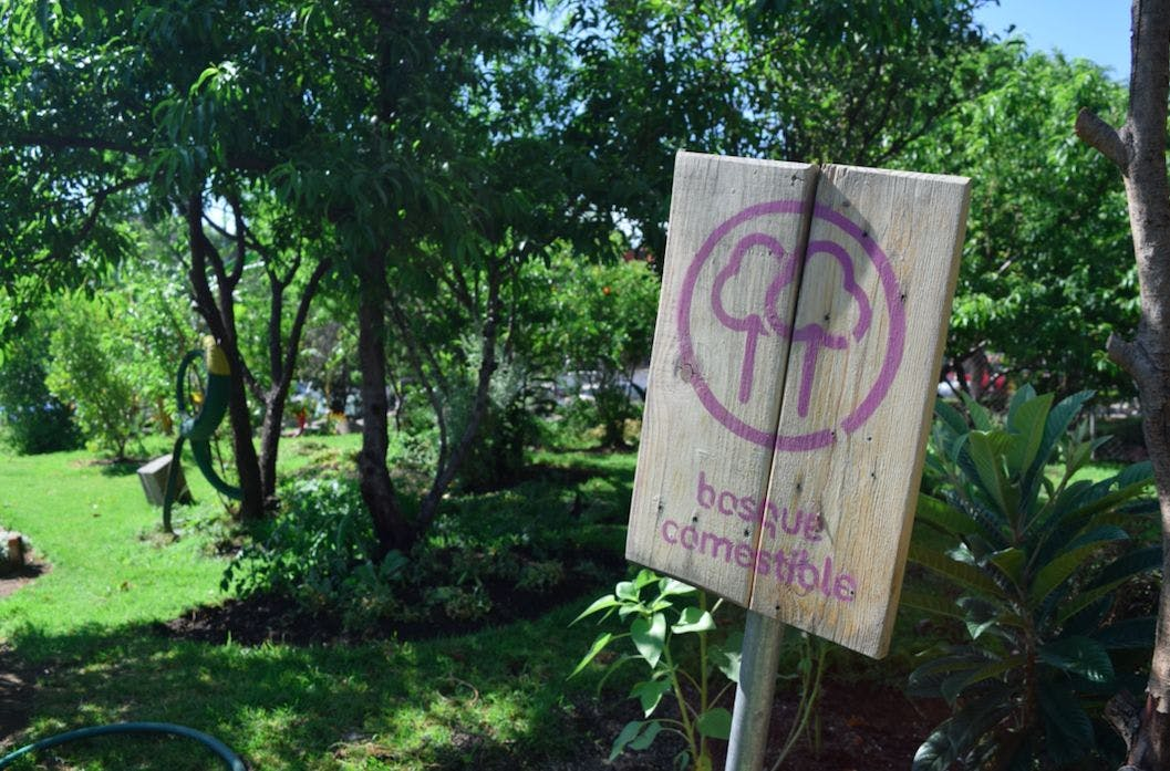 Mexico City Garden Tour: Urban Organic Farming