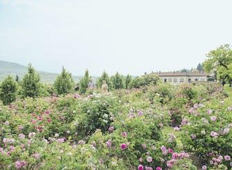 Biglietti per Rose di Maggio a Villa Della Porta Bozzolo
