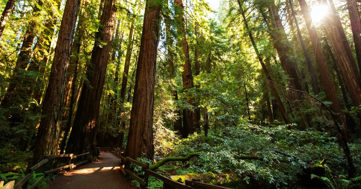 Muir Woods With 24 Hour Hop On Hop Off Bus Tour Musement
