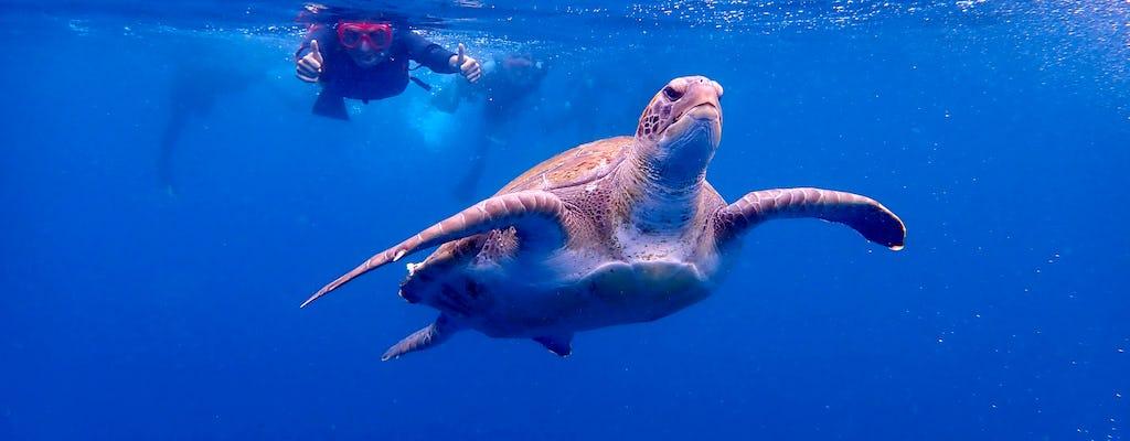 Snorkeling con tartarughe in kayak