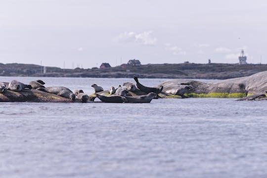 RIB speedboat seal safari from Stockholm