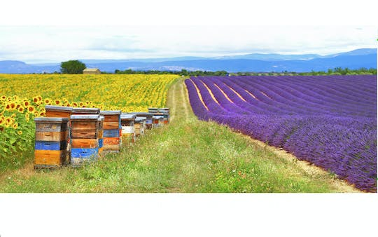 Lavender fields morning tour from Aix en Provence