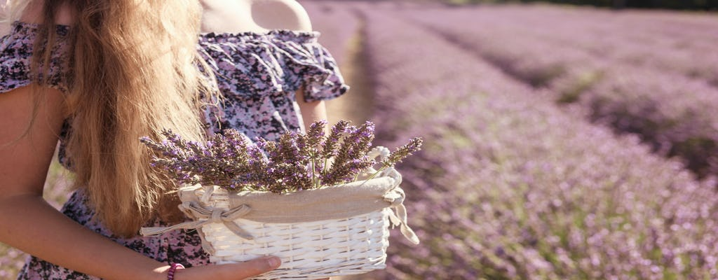 Full-day lavender tour in Sault from Aix en Provence
