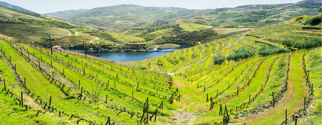 Green Douro wine tour from Porto