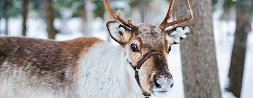 5-hour tour of Helsinki and Nuuksio Reindeer Park