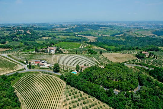 Maxi Wine Tour in San Quirico winery