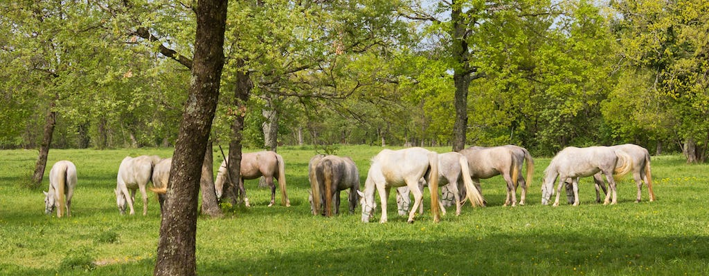 Full-day tour to Škocjan caves and Lipica stud farm