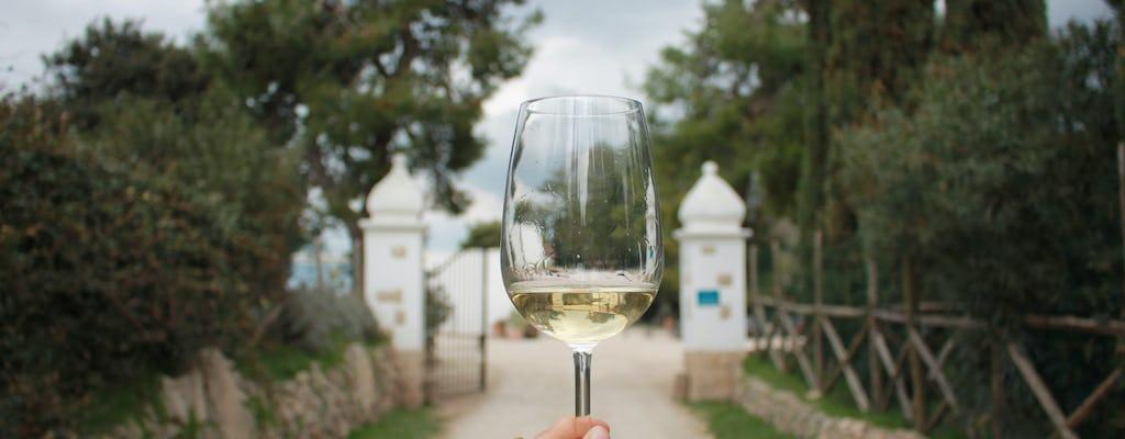 Visita a una cantina con degustazione di vino pugliese