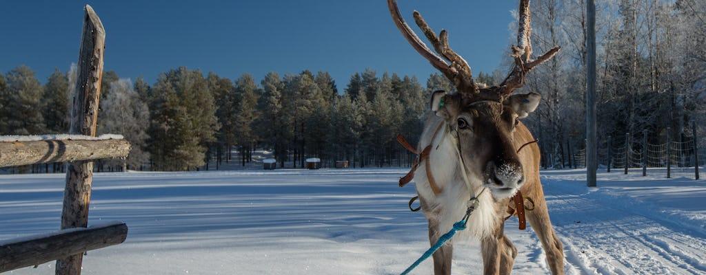 Reindeer farm experience
