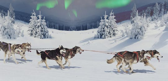 Snowmobiles and huskies in Lapland