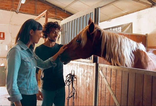 VIP small-group horses and vineyards experience