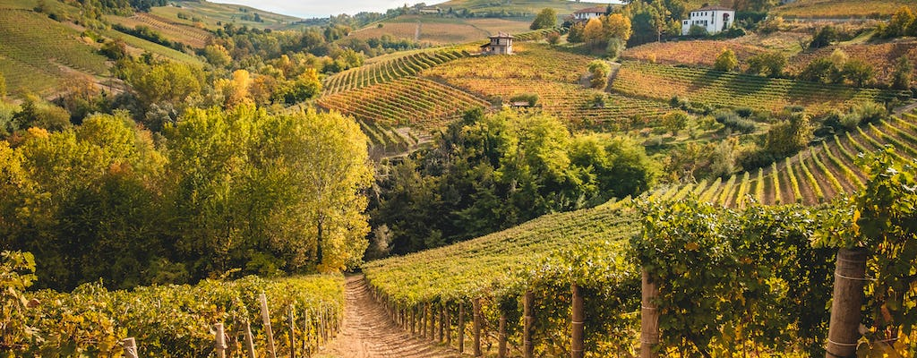 The great wine tour from Milan with Barolo and Spumante tasting