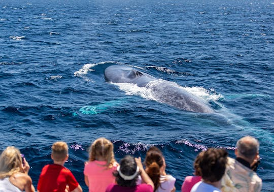 Los Angeles Dana Point high-speed Zodiac whale-watching safari