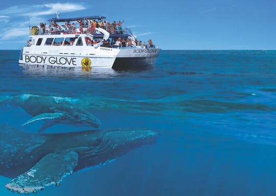 Экскурсию для наблюдения за китами от Кона