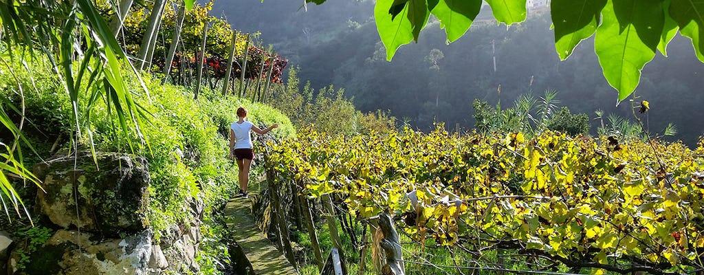 Tour del vino de Madeira desde Funchal