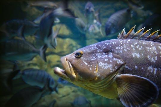Aquarium of Paris entry ticket