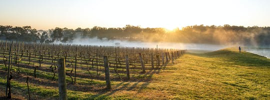 Hunter Valley food and wine experience