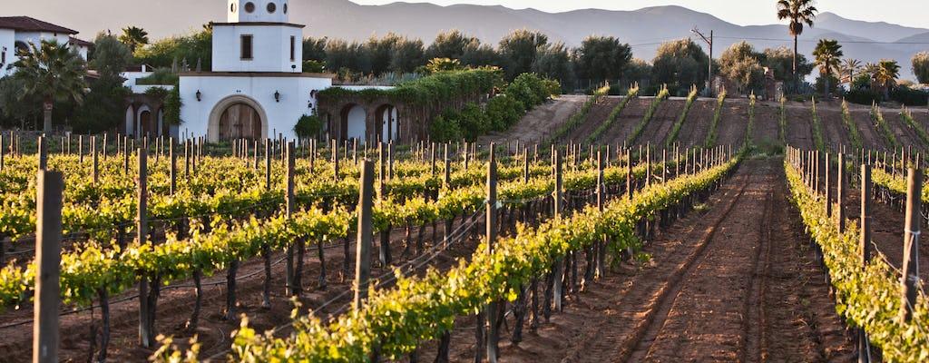 Baja wine tour