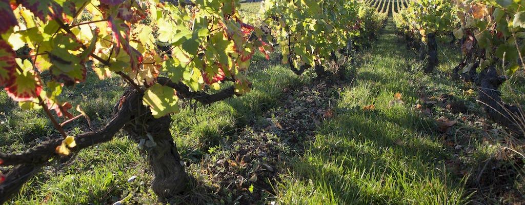 Бургундское вино & дегустация сыров тур из Дижона