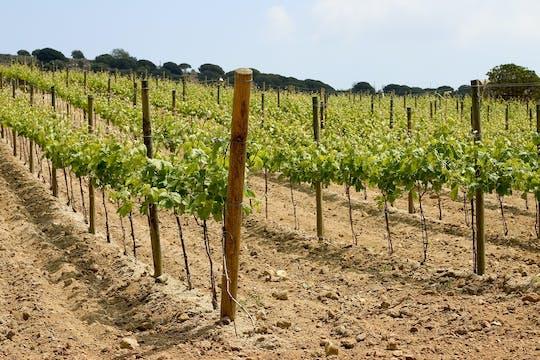 Desayuno experiencia de bodega y tour del vino desde Barcelona.