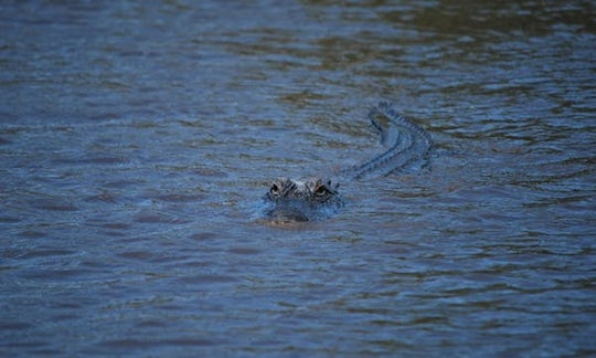 Central Florida Everglades night airboat tour with park admission