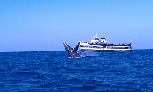Whale Watching tour in San Diego