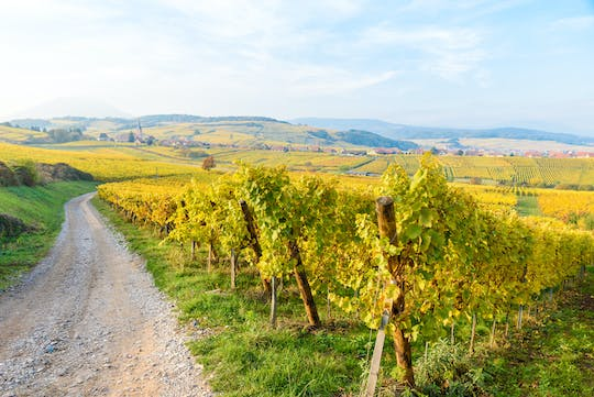 Alsace half-day shared wine tour from Strasbourg