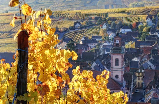 Alsace half-day shared wine tour from Colmar