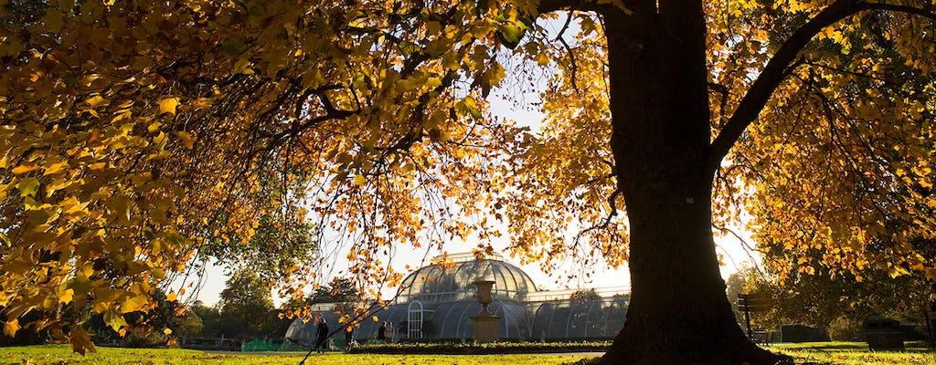 24 ore di pass per il Tamigi e Kew Gardens