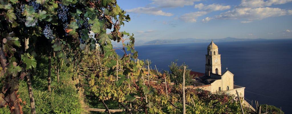 Visita a la bodega con degustación de vino y almuerzo de Marisa Cuomo