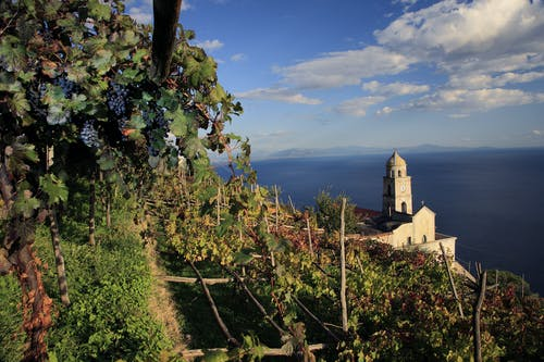 Winery tour with wine tasting and lunch at Marisa Cuomo in Amalfi coast