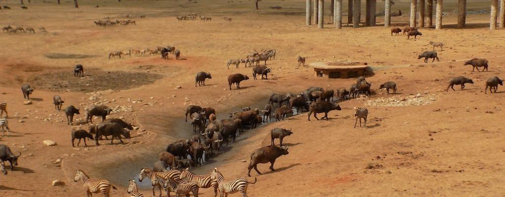 Zweitägige Safari mit Ngutuni und Salt Lick