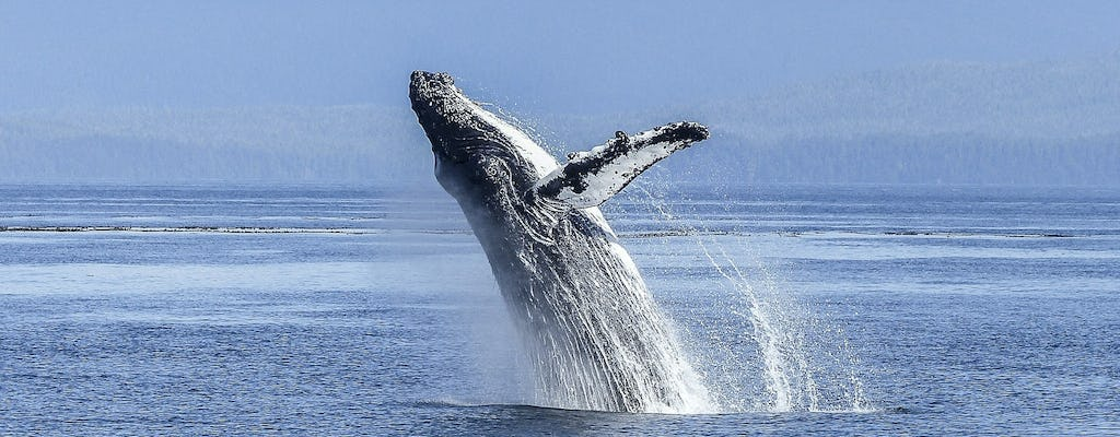Whale route full day tour